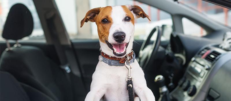 ¡Viaja con tu mascota a un destino muy GUUUAU!